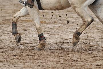 equitation dans la boue