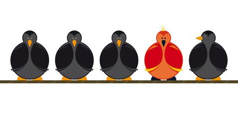 Vogel Seil Birds Rope Vielfalt Aussenseiter
