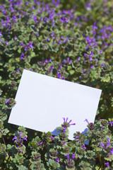 letter[purple_deadnettle]_023