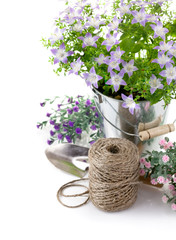garden equipment with violet flowers and green leaves isolated