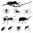 Vector Illustration: Insect collection isolated on white