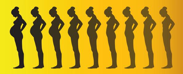 pregnancy process