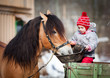 Child feeding a horse, sitting on a cart in the winter