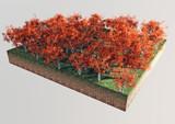 Alberi piante foglie rosse sezione terreno poster