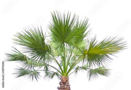 Deurstickers Palm boom palm isolated