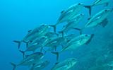 Fototapete Marine life - Unterwasser - Fische