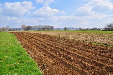 Spring field.