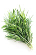 Herb Series - Rosemary
