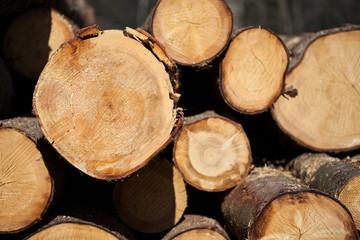 Baumaterial Holz