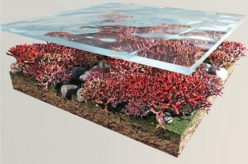 Corallo fondo marino
