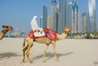 Dubai Camel on the town scape backround, United Arab Emirates..
