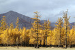 Coniferous forest in Northern Mongolia on Lake Khovsgol