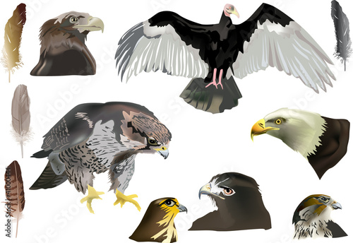 Plexiglas Eagle isolated eagles and feathers collection