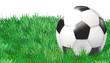 Fussbal auf dem Rasen