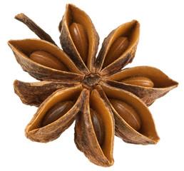 badiane, Anis étoilé, Illicium verum