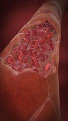 Kapillargefäß mit Blutplättchen