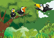 Toucans in the jungle