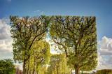 Fototapety Trees in Paris