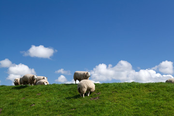 white sheep over sky