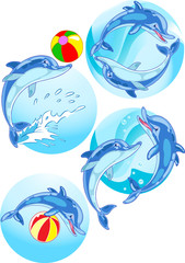 Dolphins play ball