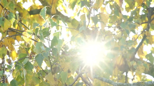 Trembling autumnal leaves with sunbeams shining through