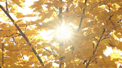 Autumn leaves on swaying branches with sunbeams shining through