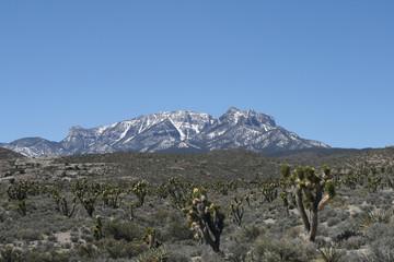 Spring mountains Nevada