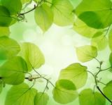 Fototapety Green leaves background