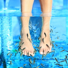Fish Spa pedicure Rufa Garra