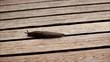 Schnecke auf Holz