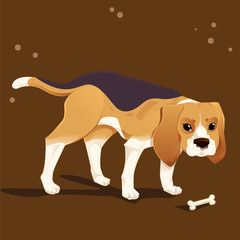 Beagle hound dog and food
