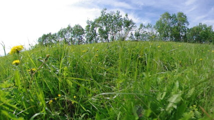 green meadow