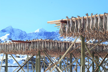 stockfish and  lofoten's mounts
