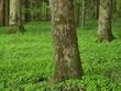 Fototapeten,laubbäume,nadelbaum,baumspiegelung,lumber