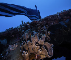 Coral below the US Flag on the USS Spiegel Grove