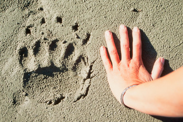 Grizzly bear track and human hand.