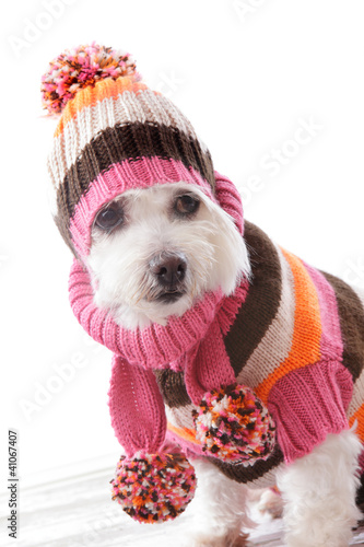 Warm dog wearing knitted beanie and jumper