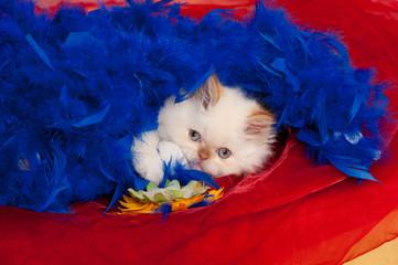 gatto 3