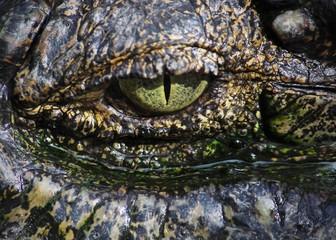 close up on a crocodile's eye