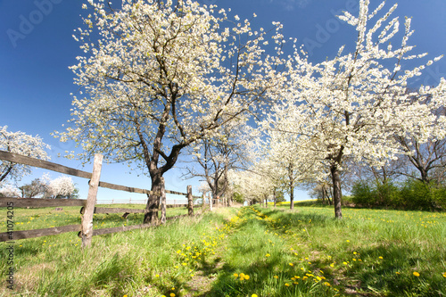 In de dag Paardebloem Blütenpracht