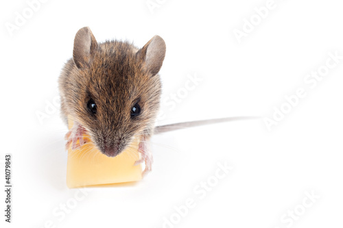 Maus mit Käse (freigestellt vor weiß)