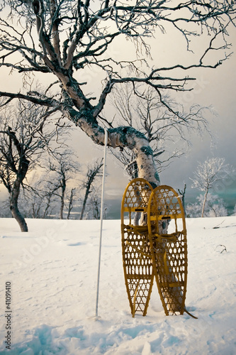 Wooden snowshoes leaning against a Birch  tree