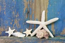Souvenirs de vacances - Coquillages sur la côte
