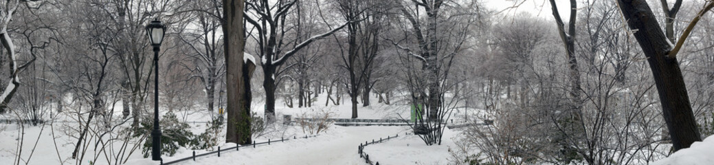 Central Park after ice storm