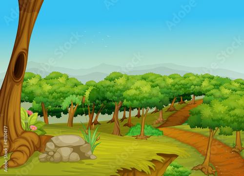 Foto op Canvas Boerderij Lovely forest path