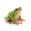 Fototapeten,frosch,grün,amphibie,isoliert