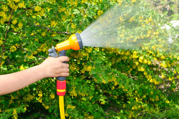 Watering the garden with a hose