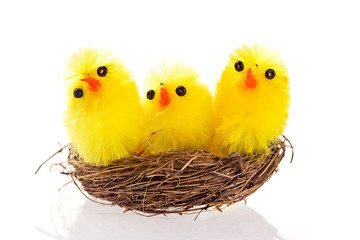 Macro shot of three Easter chicks in a nest on white background