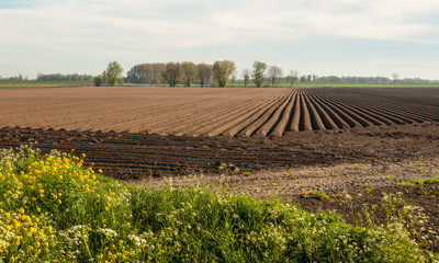 Large field after planting potatoes