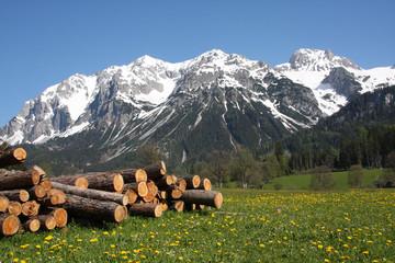 Blumenwiese mit Gebirge